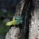 una pequeña lagartija