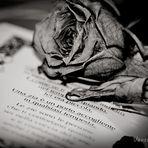 una poesia anche per te