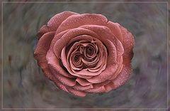 Una rosa muy especial