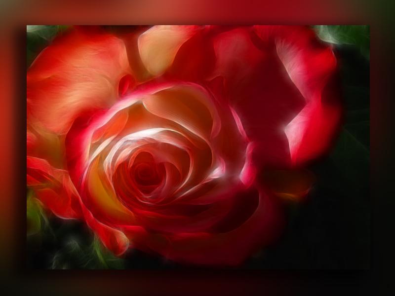 Una Rosa Para Otra Rosa Imagen Foto Plantas Flores Naturaleza