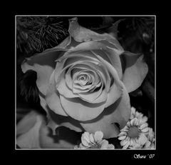 una rosa per tutti....