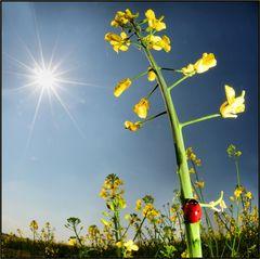 una scala per il sole