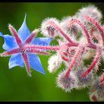 Una stella in giardino