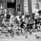 Una tarde dando de comer a las palomas
