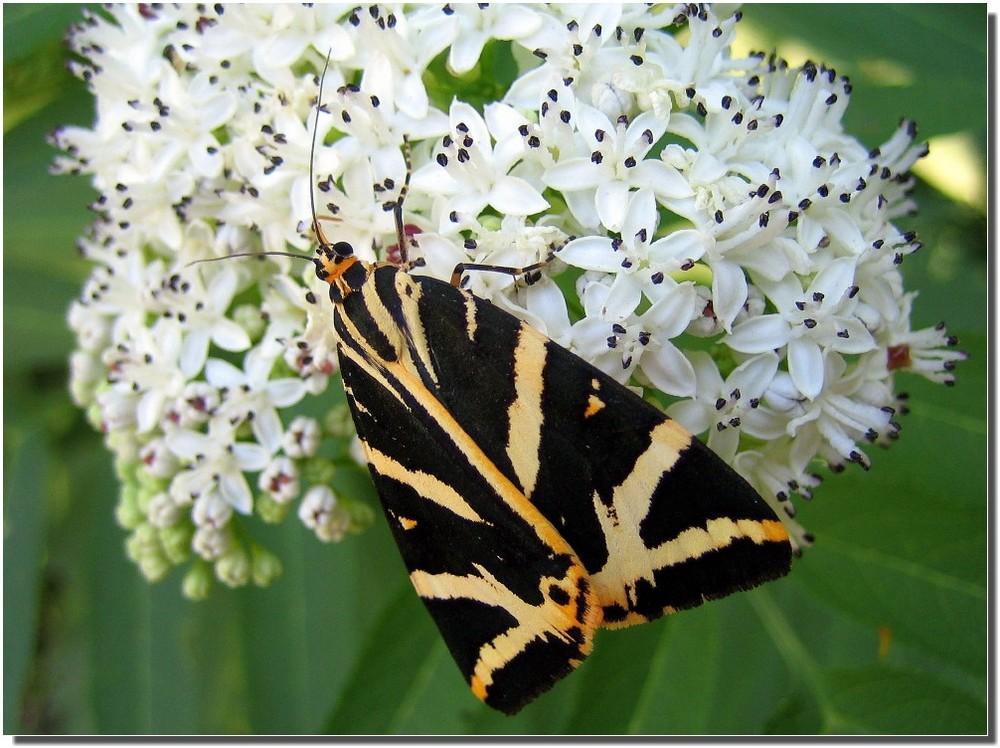 Un'altra farfalla