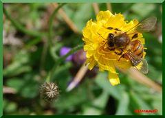 un'ape non fa primavera?