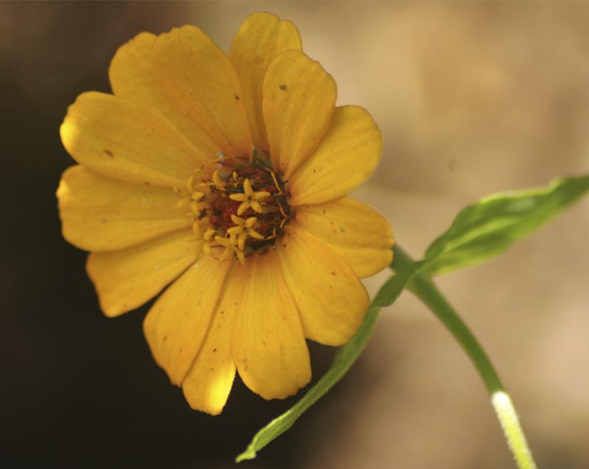 Unas flores amarillas pa' acordarse de su pelo