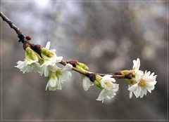 Unaufhaltsam dem Frühling entgegen