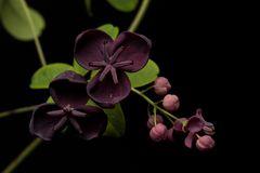 Unbekannt Blüte