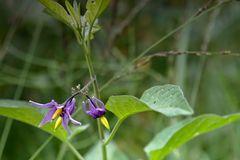 Unbekannt Blume