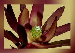 Unbekannte Blüte