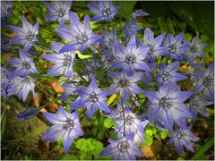 Unbekannte Blüten in meinem Garten, jetzt bekannt !