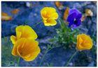 unbekannte Blüten vor blauer Felsmauer