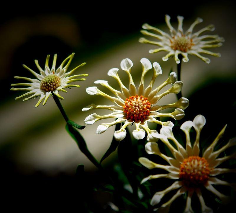 unbekannte Blume....
