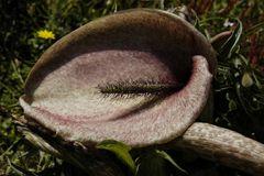 unbekannte Pflanze 2