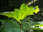 Unbekannte Pflanze im Wald