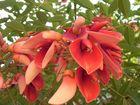 Unbekannte Schöne Blüte