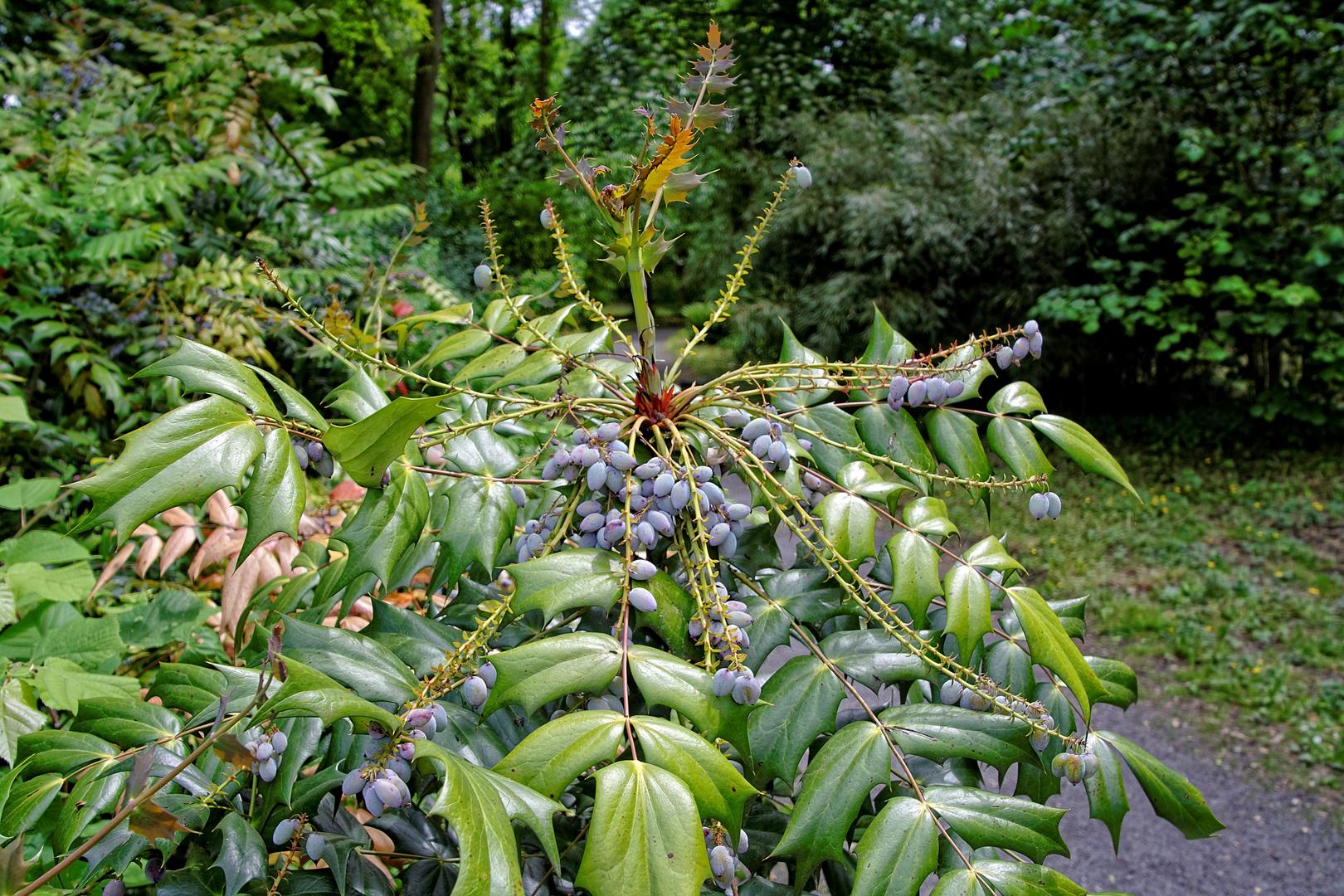 Unbekannte Schönheit Im Botanischen Garten In Göttingen Foto Bild