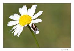 Unbekannter Käfer...