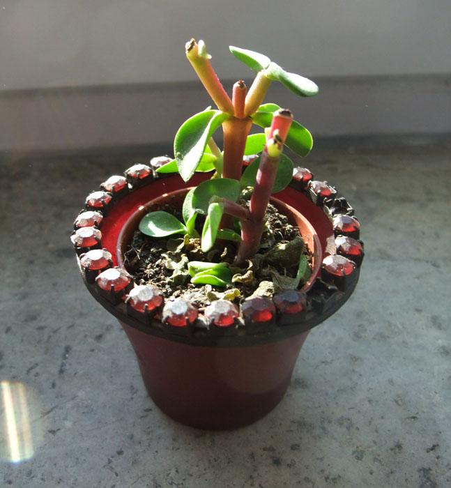 Unbekannter Kaktus