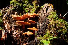 unbekannter Pilz 6