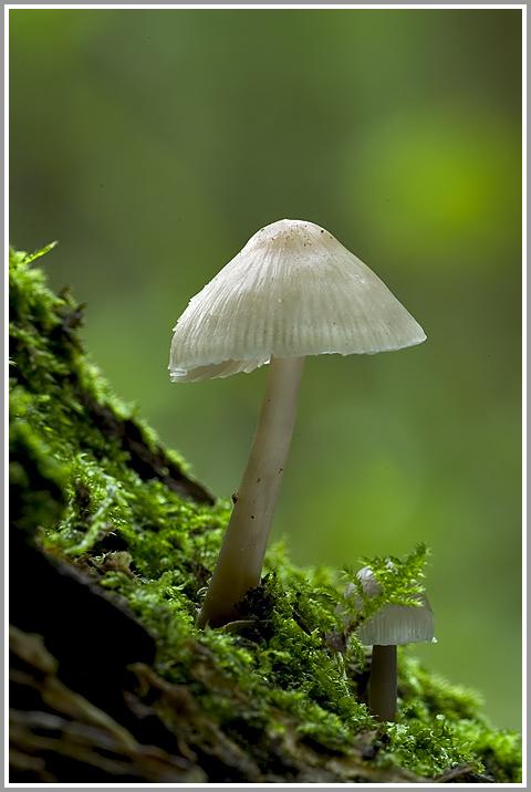 Unbekannter Pilz auf Totholz 2