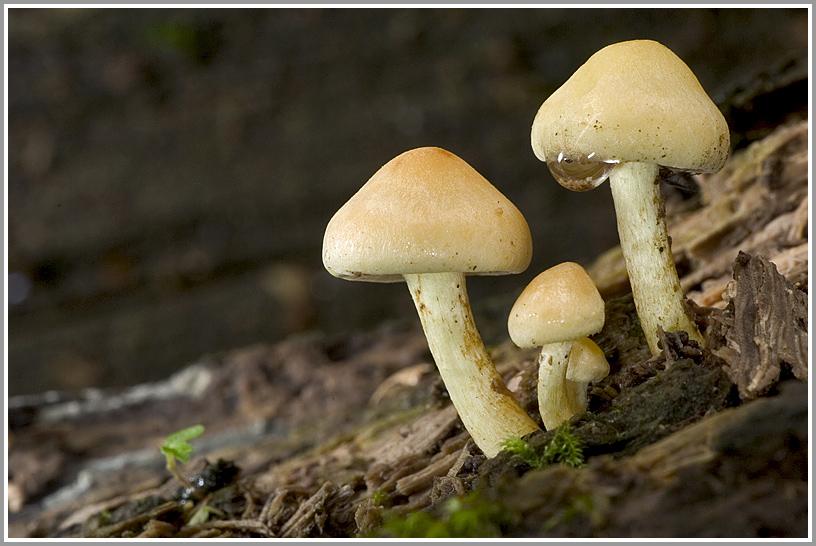 Unbekannter Pilz auf Totholz