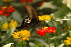 Unbekannter Schmetterling