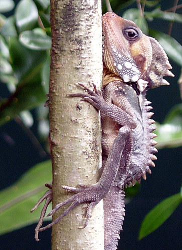 Unbekanntes aus Queensland, Juni 2005