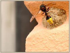 Unbekanntes Flugobjekt [bzw. Lehmwespe mit Nest]