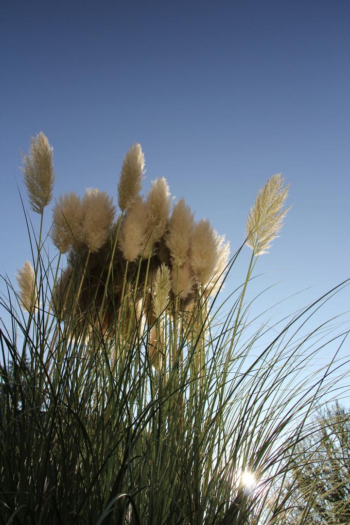 Unbekanntes Gras