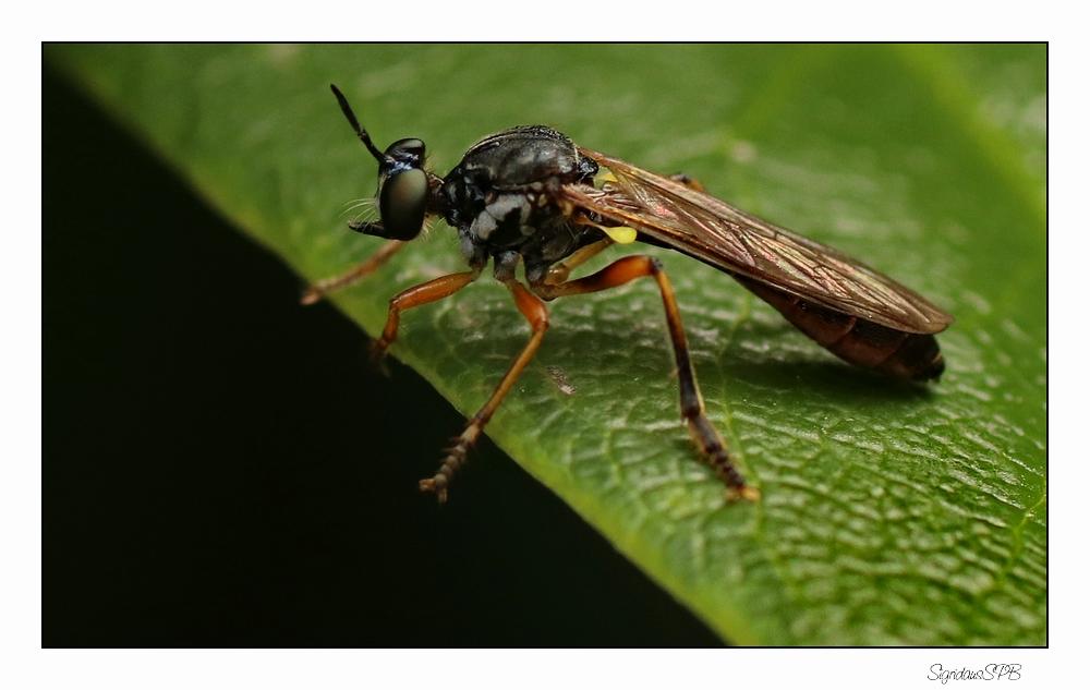Unbekanntes Insekt....
