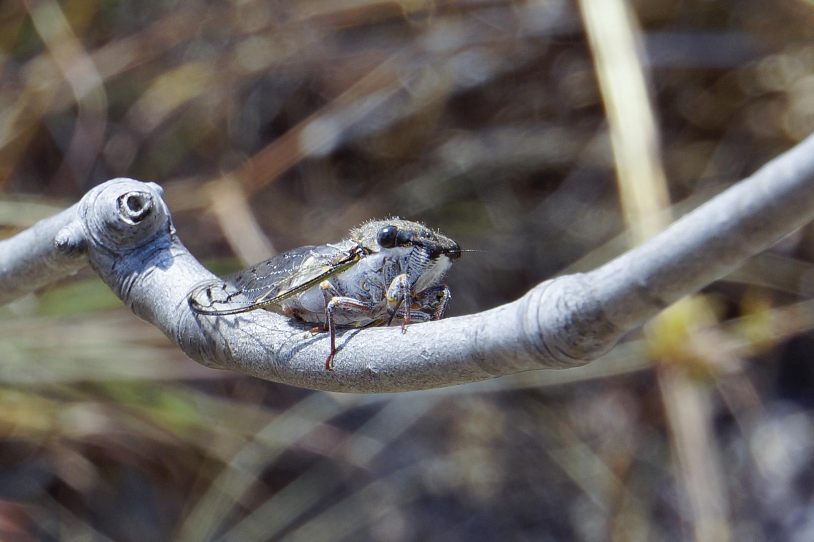 Unbekanntes Insekt gesehen bei Wanderung auf Madagaskar