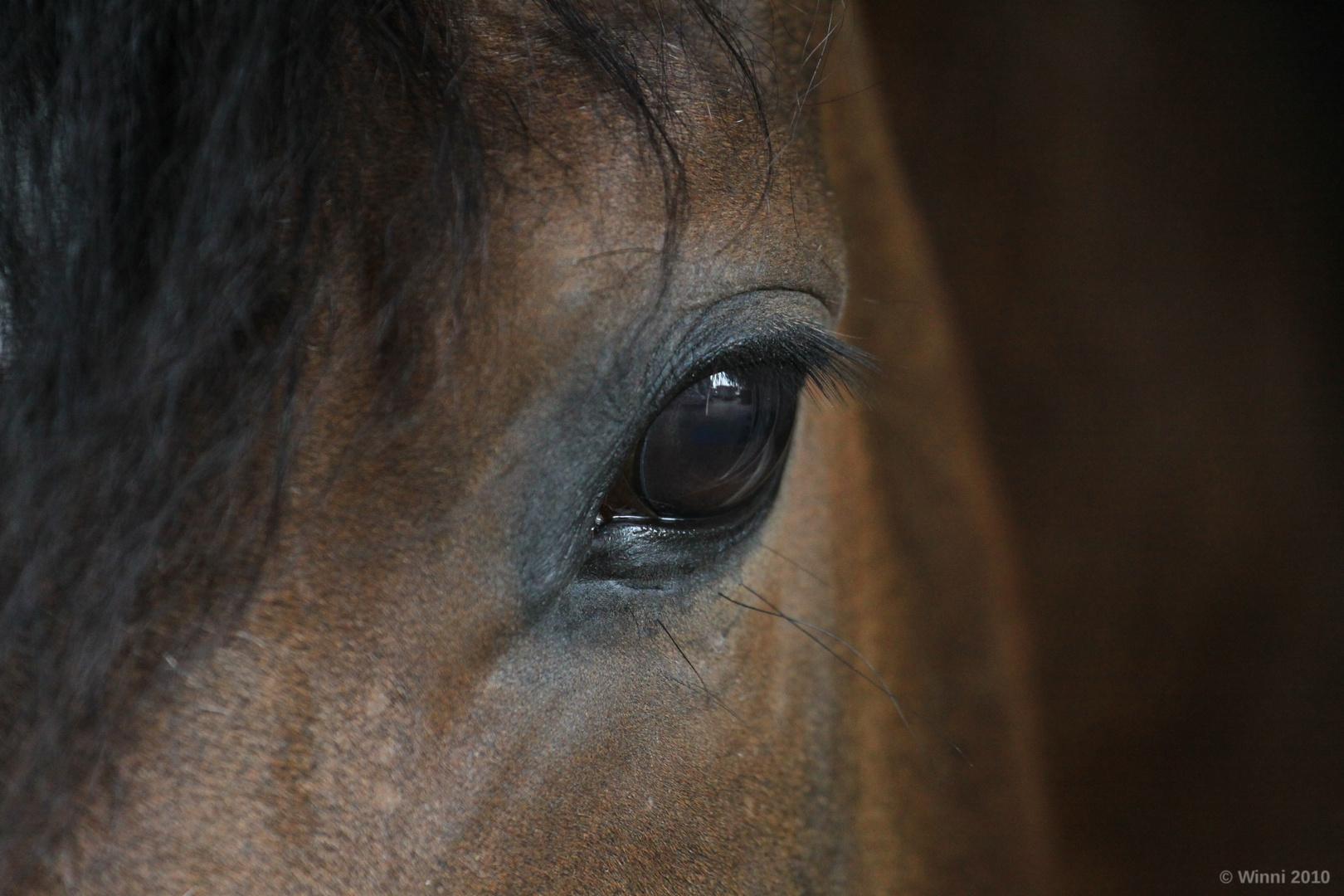 Unbekanntes Pferd
