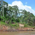 Unberührte Landschaft am Rio Tambopata in Peru