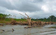 Unberührte Natur am Rio Tambopata