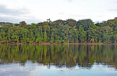 Unberührte Urwaldlandschaft am Rio Tambopata