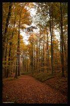Unberührter Herbstwald!