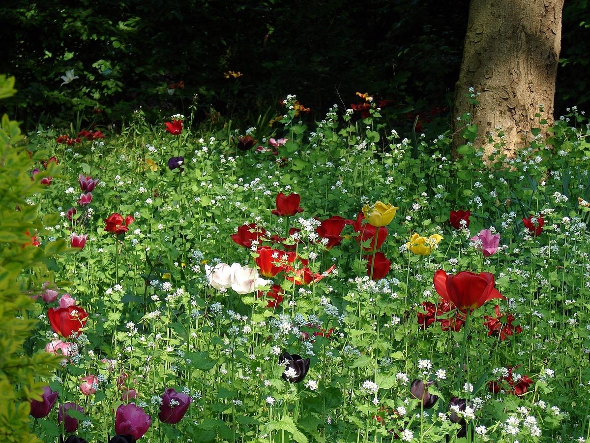 unbeschreiblich schön ist der Frühling.