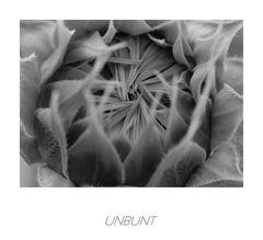unbunt