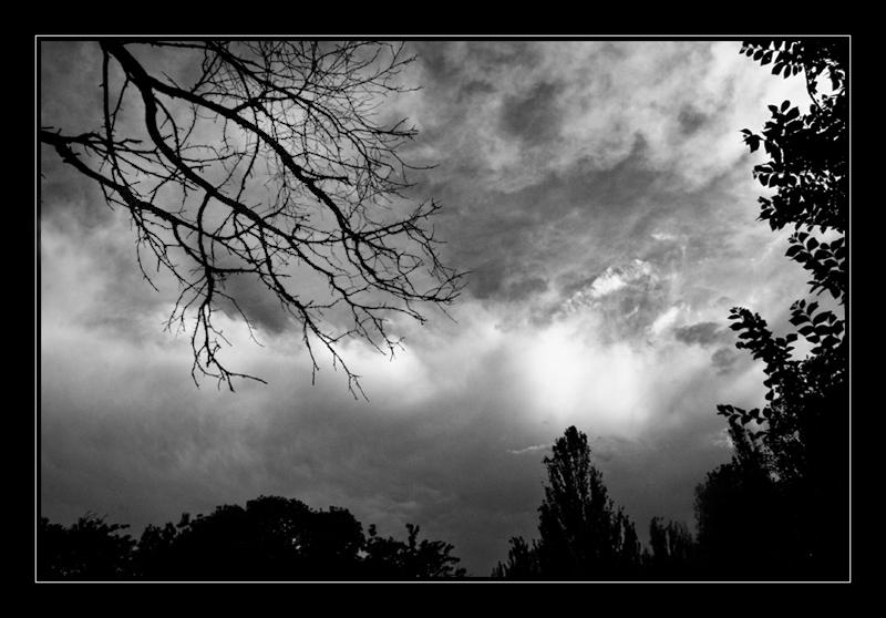 unclothe tree