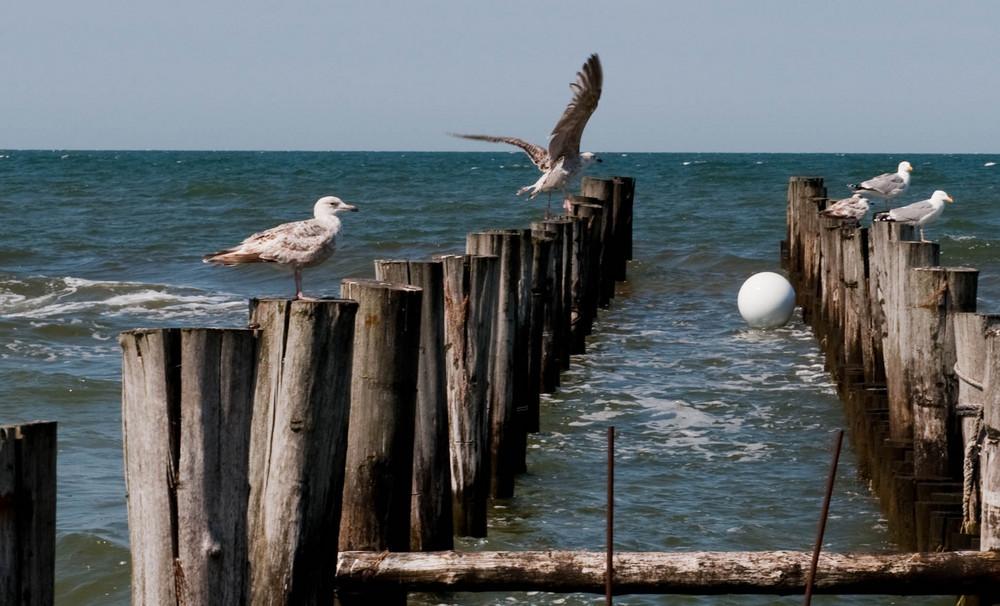 ... und an der Ostsee waren wir, bei schönstem Wetter!