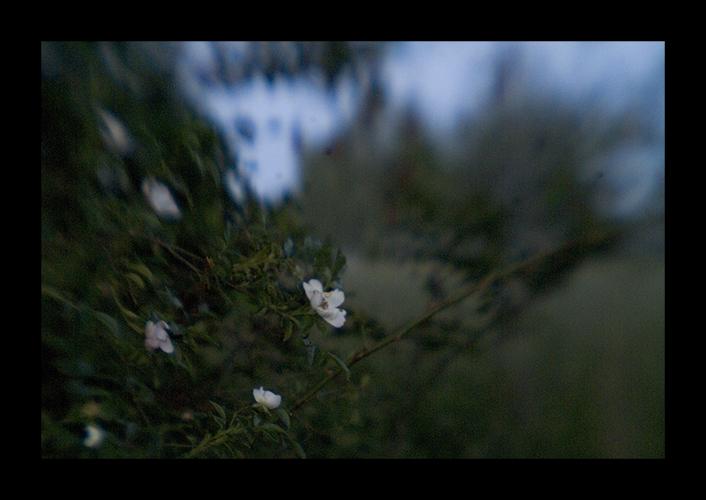 ... und blüten stauben duftend ...