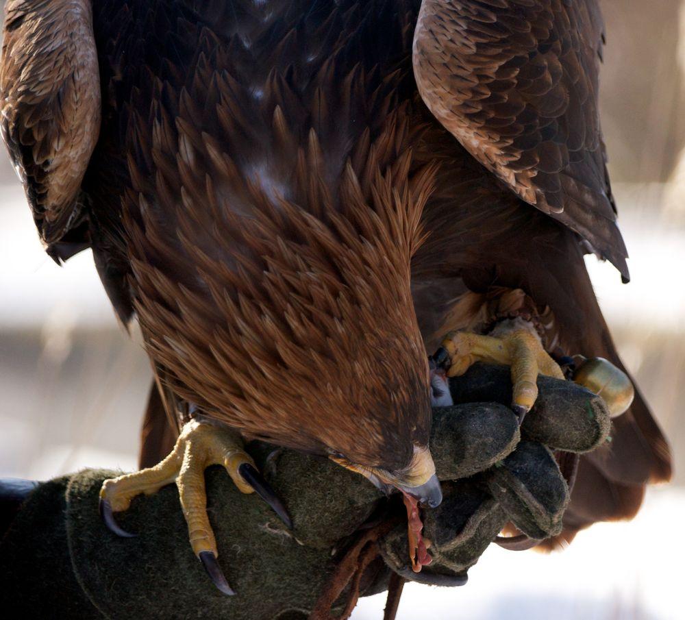 Und danach gibt es die Belohnung für den Adler!