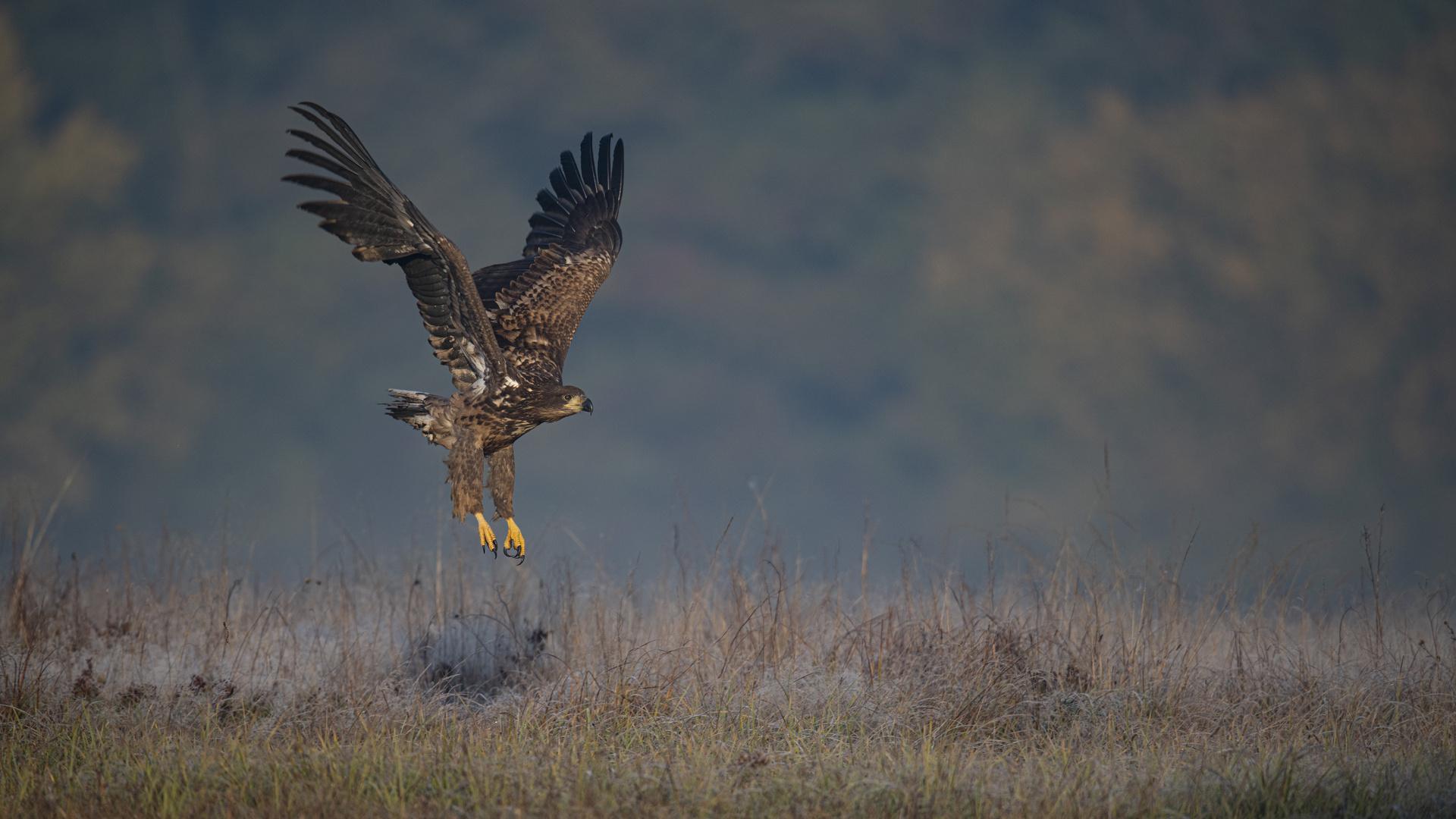 und dann der zweite Adler