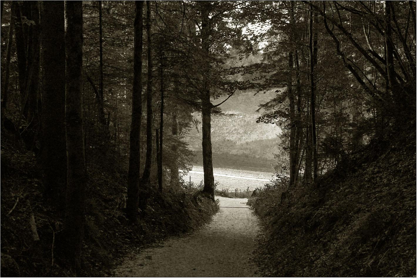 ... und dann öffnete sich der dunkle Wald ...