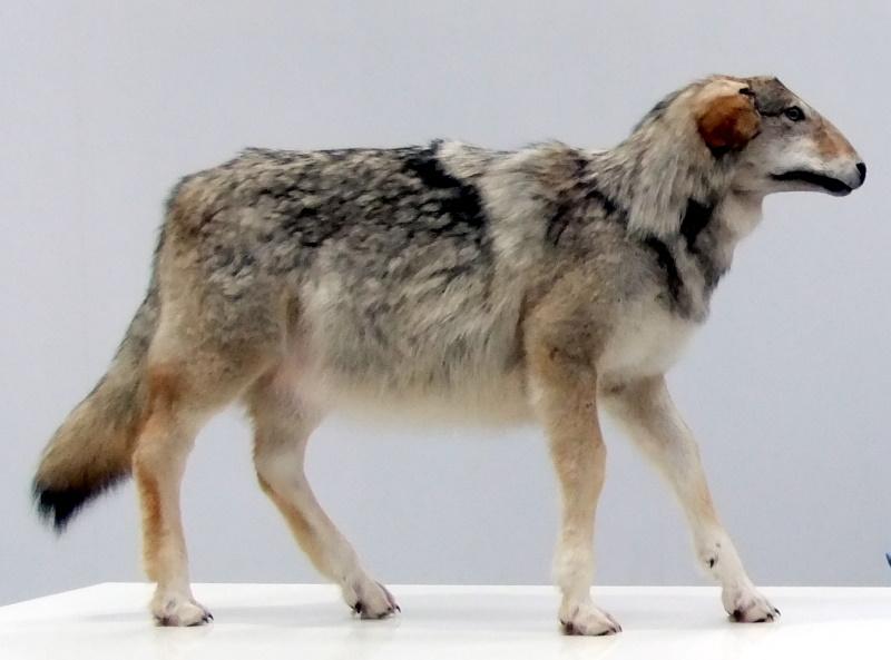 und das Schaf im Wolfspelz