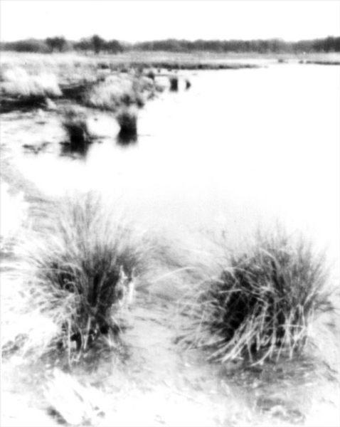 ..und den Tag am Moor.. (Pinhole)