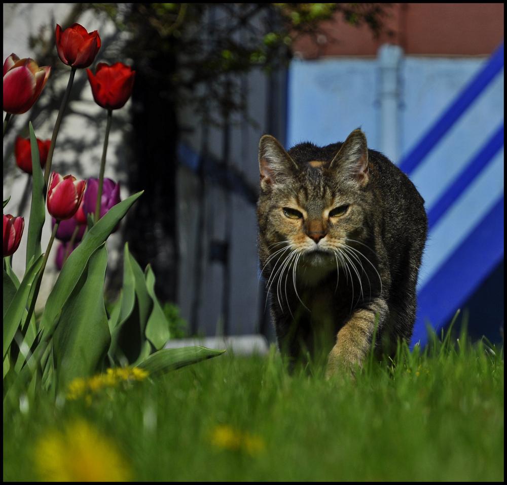 Und der Blumenfotograf ahnte: jetzt ist Schluß mit lustig...