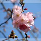 Und der Frühling kommt doch, ...